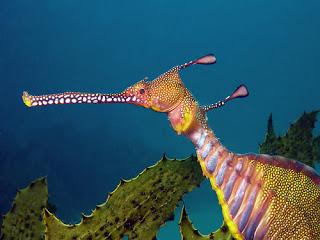 naga laut 2