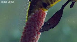 naga laut 6